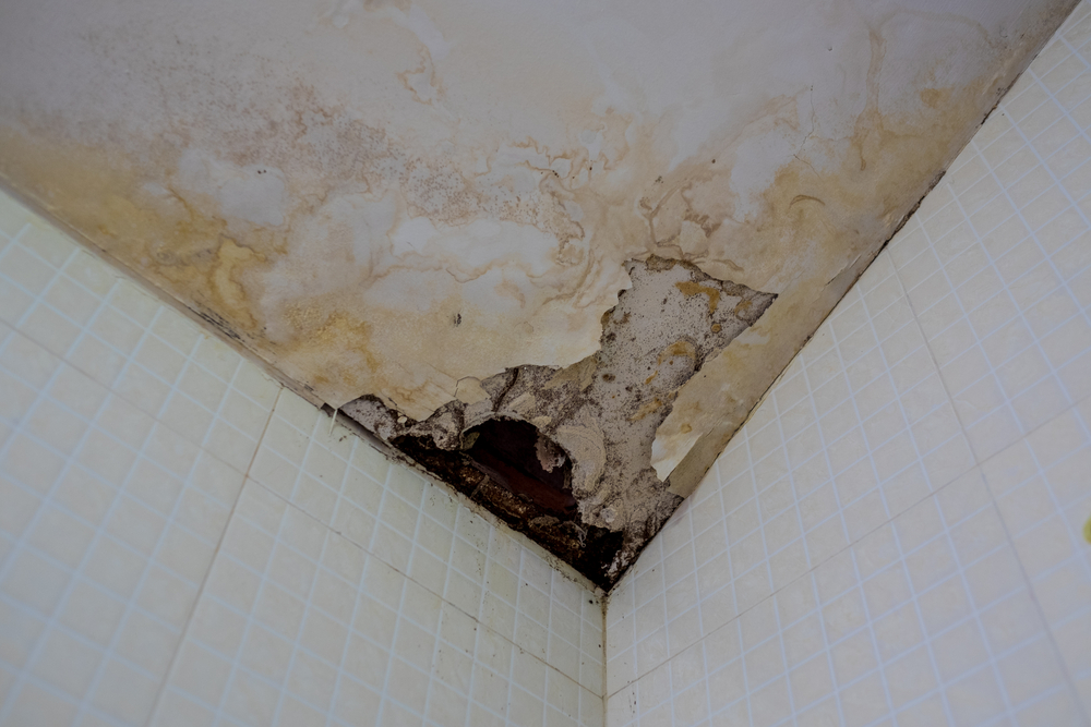 mold in bathroom ceiling and walls