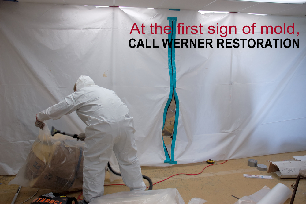 Black mold removal company | Werner Restoration Services of Colona, IL