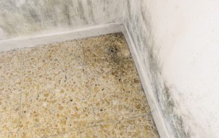 7 Mold Facts You Need to Know