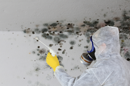 mold damage on walls and ceiling | PPE for safety