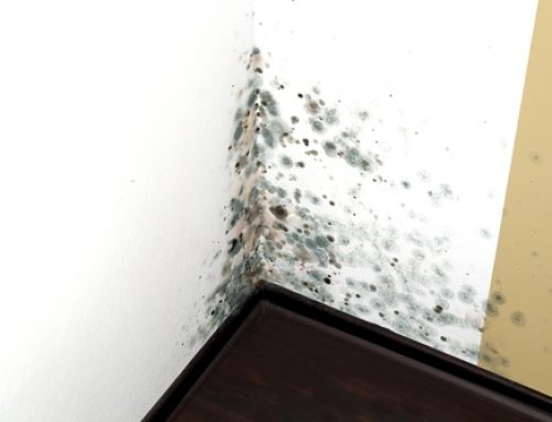 4 SIGNS THAT YOU HAVE A MOLD PROBLEM